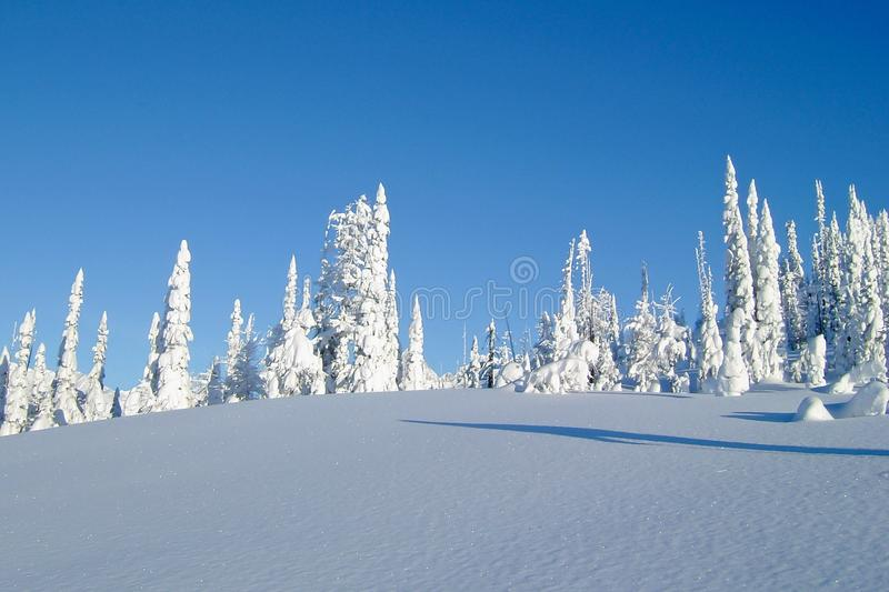 Snowcovered trees in The Bugaboos, a mountain range in the Purcell Mountains, Bugaboo Provincial Park, Britisch Columbia. Canada royalty free stock photography