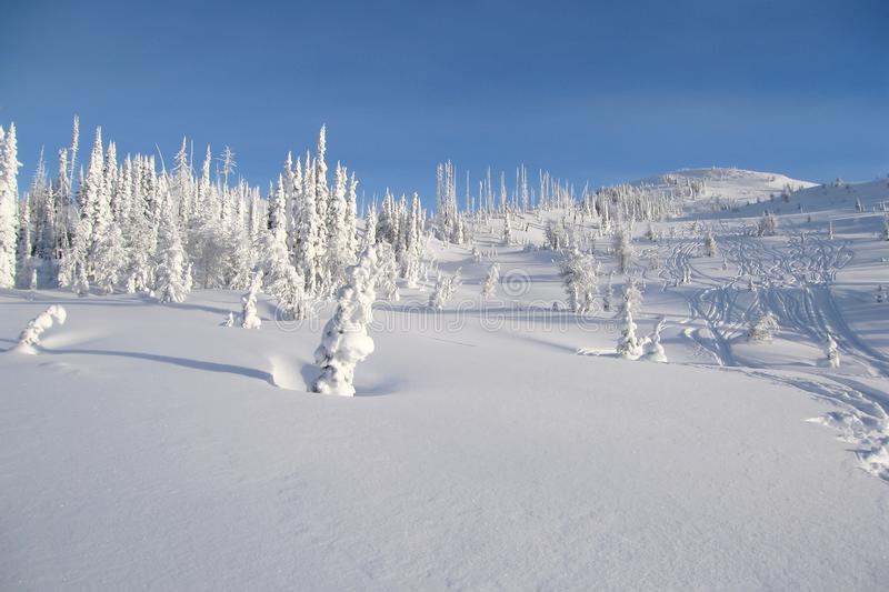 Snowcovered trees in The Bugaboos, a mountain range in the Purcell Mountains, Bugaboo Provincial Park, Britisch Columbia. Canada stock photo