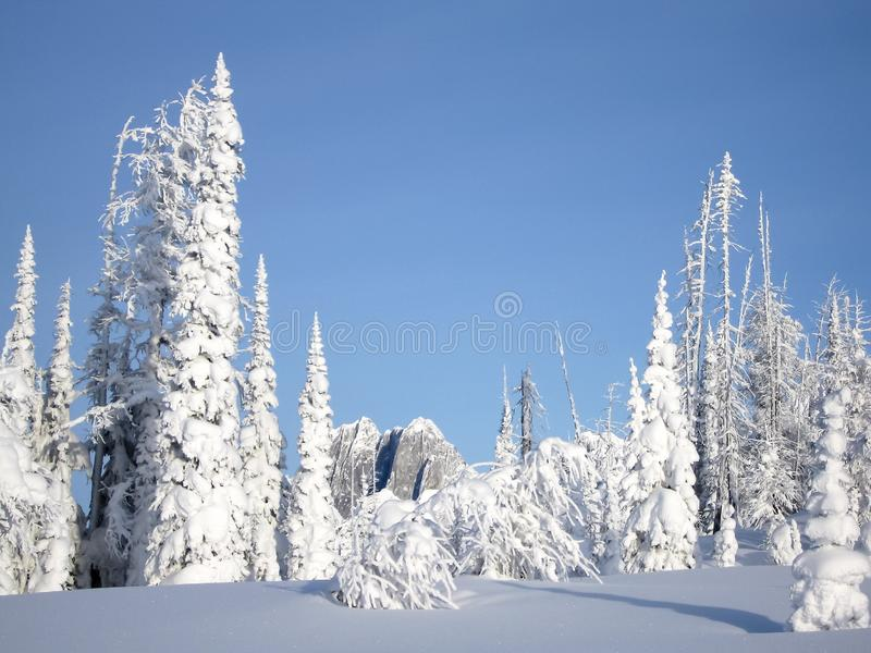 Snowcovered trees in The Bugaboos, a mountain range in the Purcell Mountains, Bugaboo Provincial Park, Britisch Columbia. Canada royalty free stock image