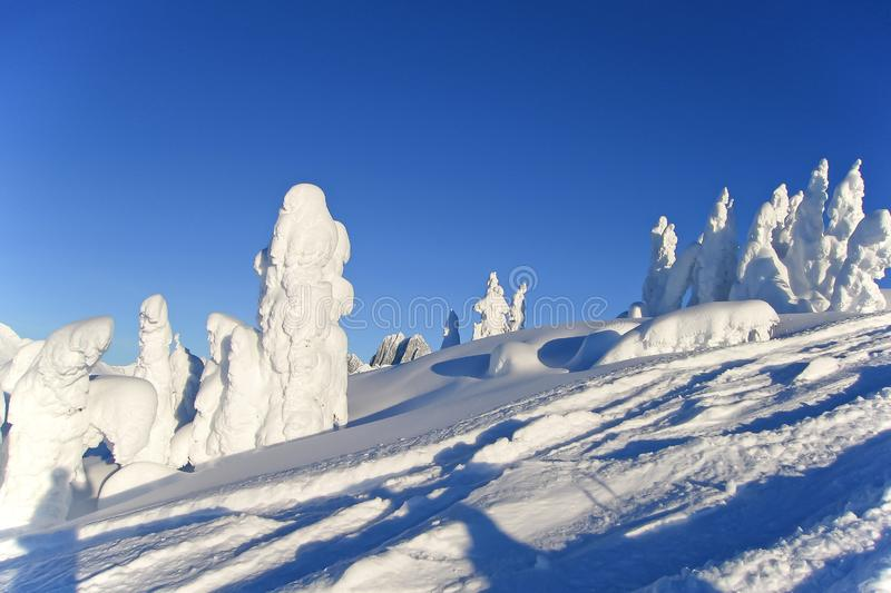 Snowcovered trees in The Bugaboos, a mountain range in the Purcell Mountains, Bugaboo Provincial Park, Britisch Columbia. Canada stock photography
