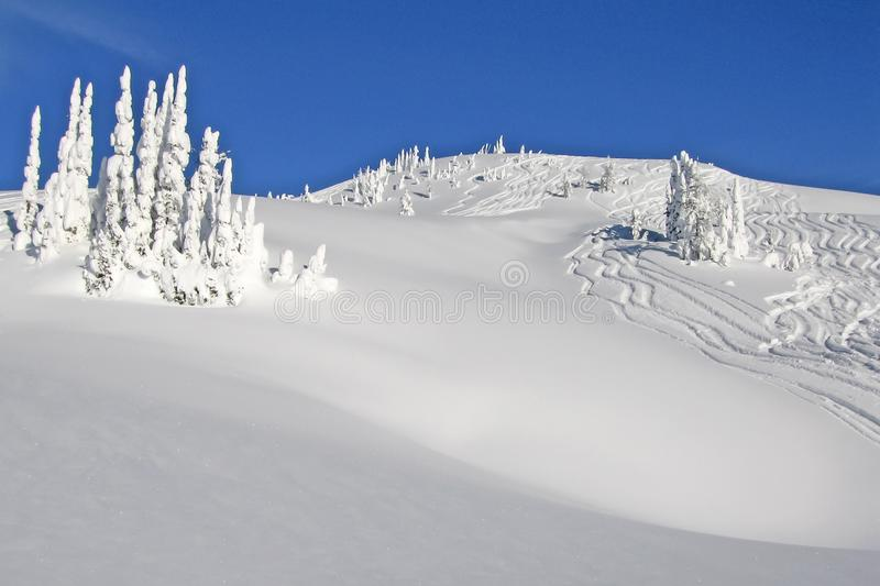 Snowcovered trees in The Bugaboos, a mountain range in the Purcell Mountains, Bugaboo Provincial Park, Britisch Columbia. Canada royalty free stock photos