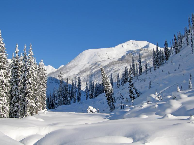 Snowcovered trees in The Bugaboos, a mountain range in the Purcell Mountains, Bugaboo Provincial Park, Britisch Columbia. Canada stock image
