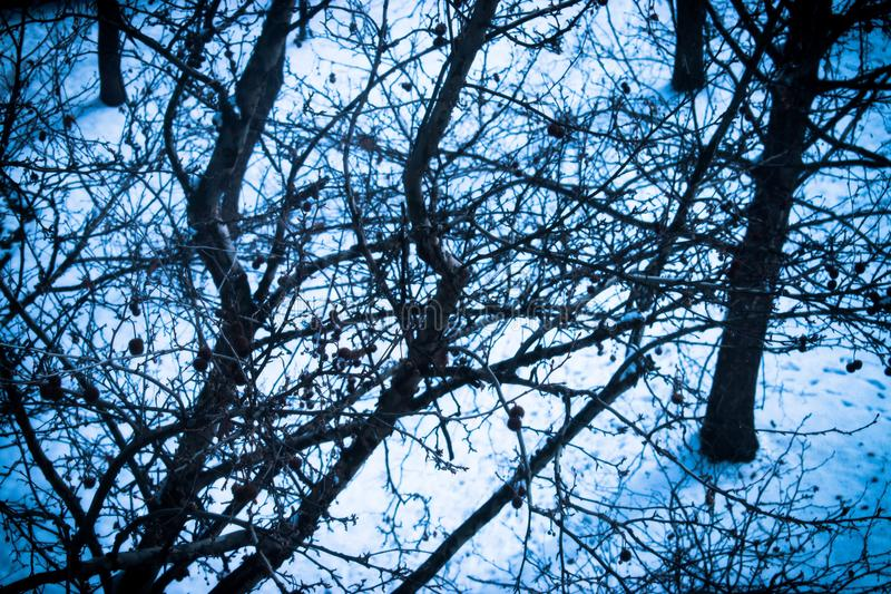 Snowday fönstersikt royaltyfri bild