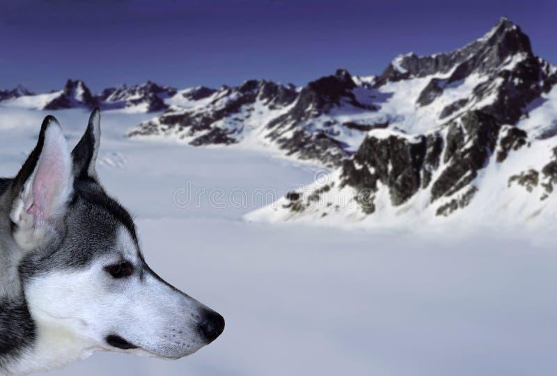 Snowdog fotografia stock libera da diritti