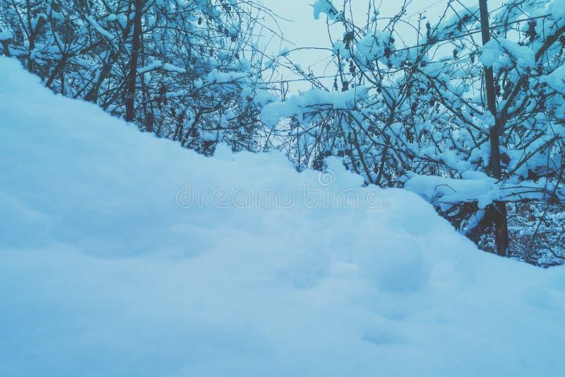 Snowdrift i vinterparken arkivbild