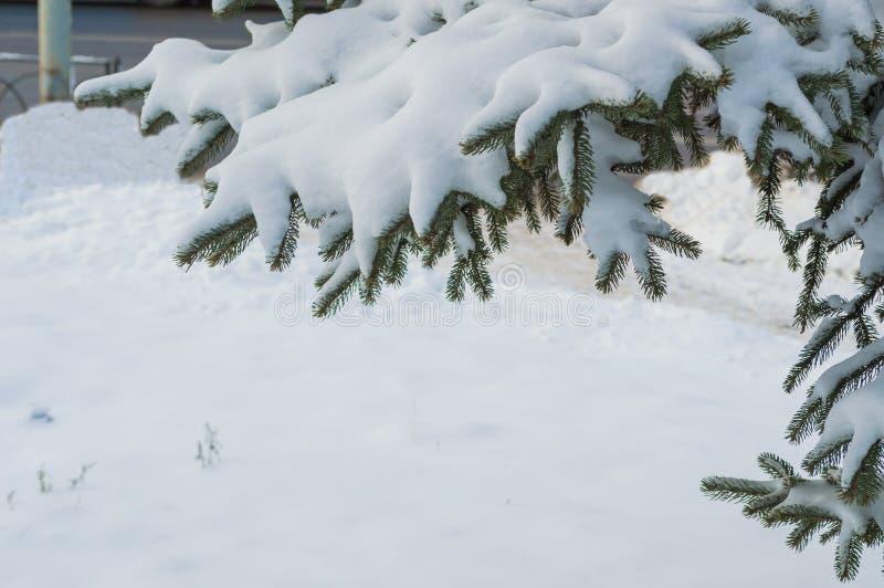 Snowdrift på en gren av gran fotografering för bildbyråer
