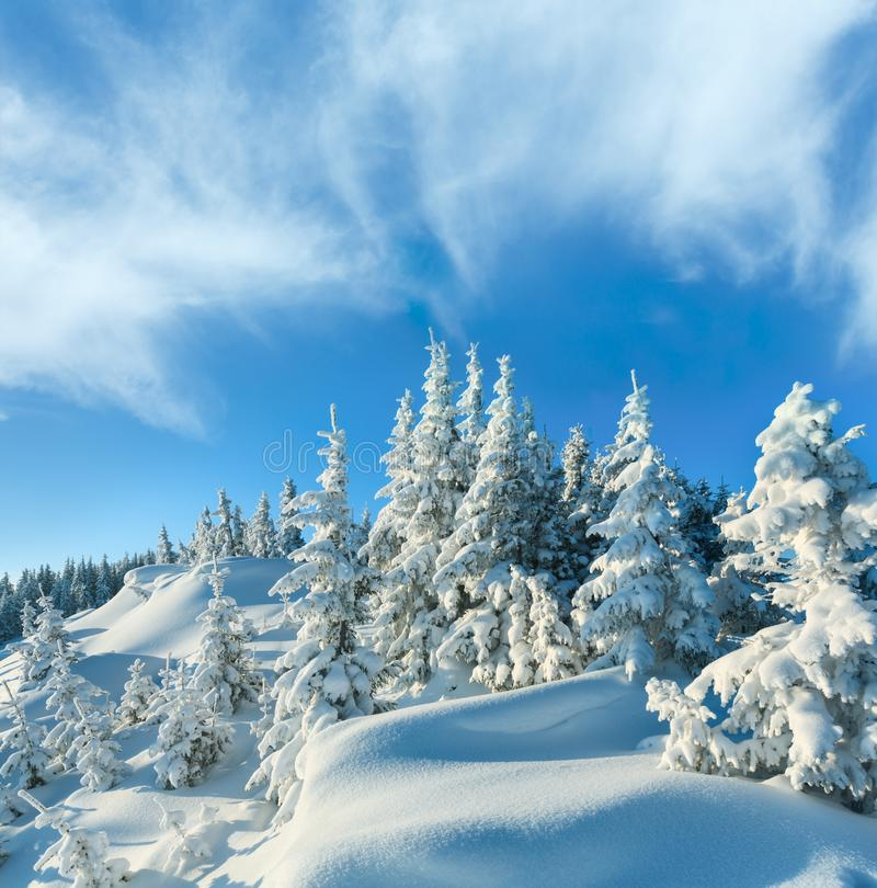 Snowdrifts on winter snow covered mountainside. And fir trees on hill top and deep cloudy blue sky stock images
