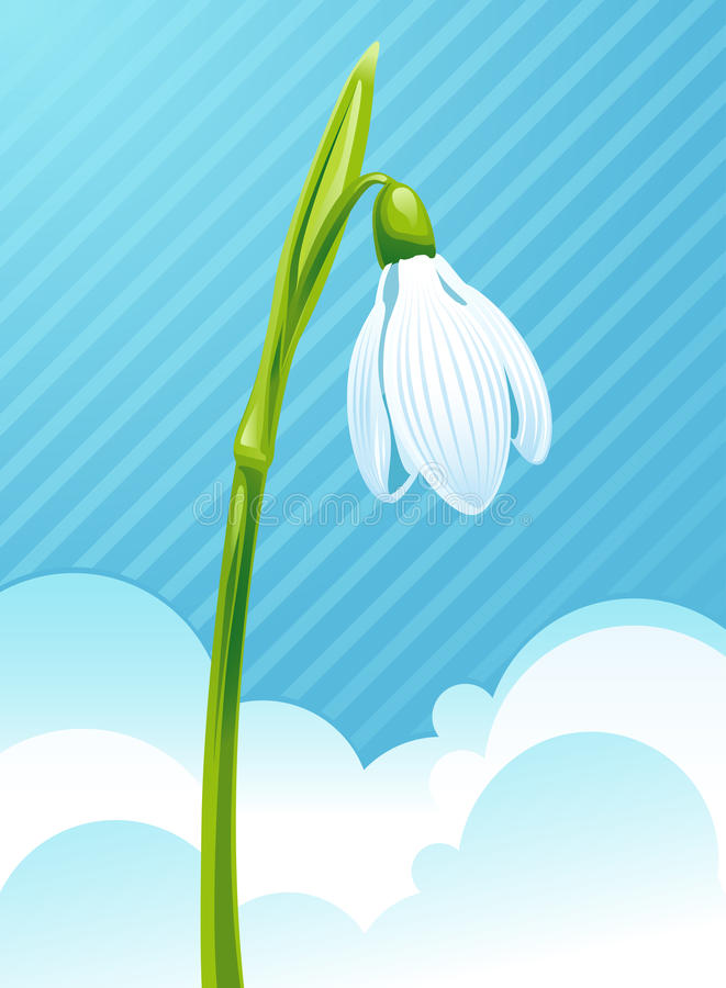 Download Snowdrop Stock Photography - Image: 13252742