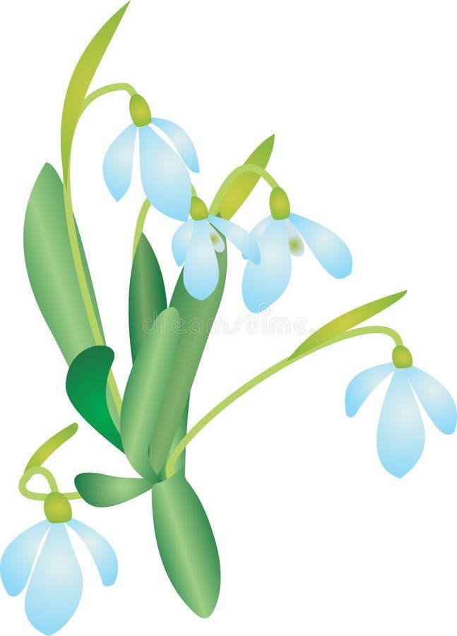 Download Snowdrop stock vector. Illustration of macro, flower - 18947125
