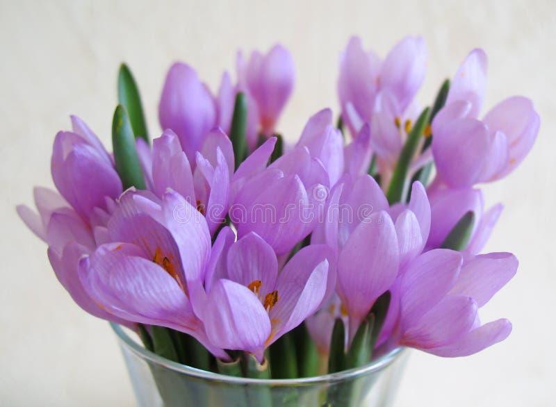 Snowdrop Blumen lizenzfreies stockbild