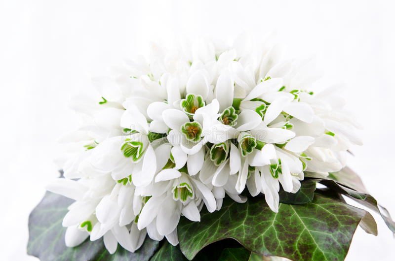 Snowdrop bouquet, white spring flowers on light background. Copy space stock photography