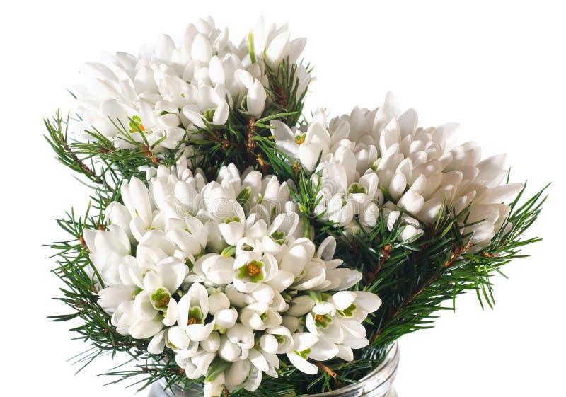 Snowdrop fiorisce il nosegay isolato su bianco immagini stock libere da diritti