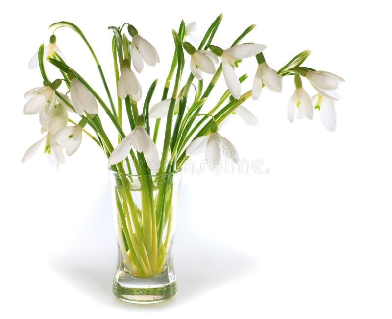 Snowdrop fiorisce il nosegay isolato su bianco fotografie stock libere da diritti