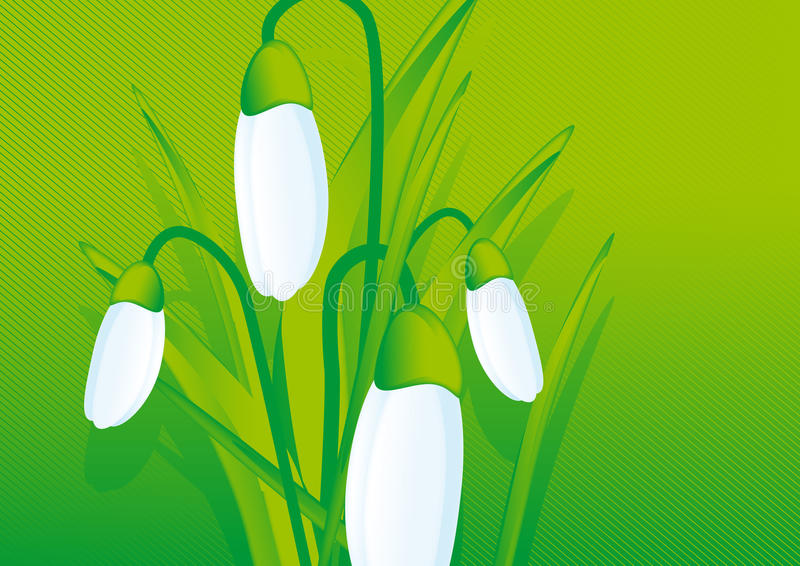 Download Snowdrop flower stock vector. Illustration of spring - 12084109