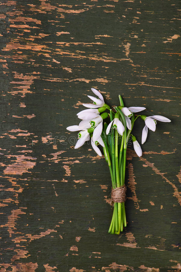 Snowdrop flowers bouquet on green wooden rustic background royalty free stock photo