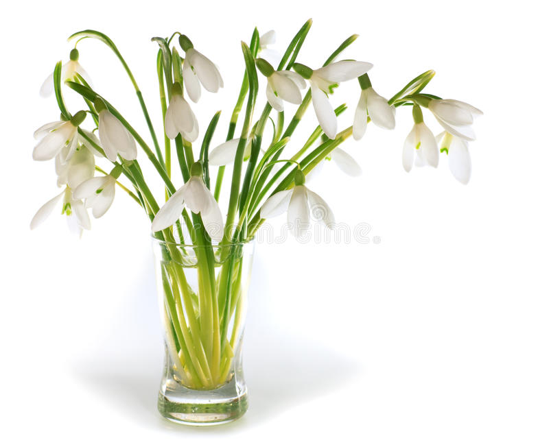 Download Snowdrop Flowers Nosegay Isolated On White Stock Photo - Image: 12348678