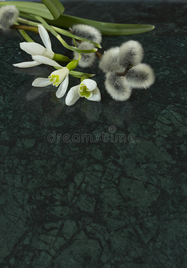 Snowdrop flowers and willow branches on Verde Guatemala marble s royalty free stock photos