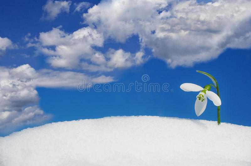 Snowdrop and sky royalty free stock photo