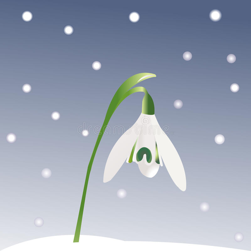 Download Snowdrop and snowflakes stock vector. Illustration of arctic - 18410039