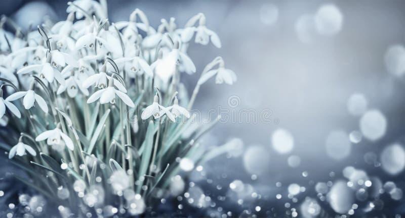 Snowdrops开花在与bokeh的室外自然背景在庭院、公园或者森林,正面图里 免版税库存照片