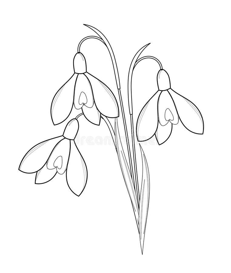 snowdrops花束-外形图 库存照片