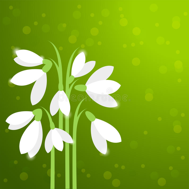Snowdrops,第一朵春天花 向量例证