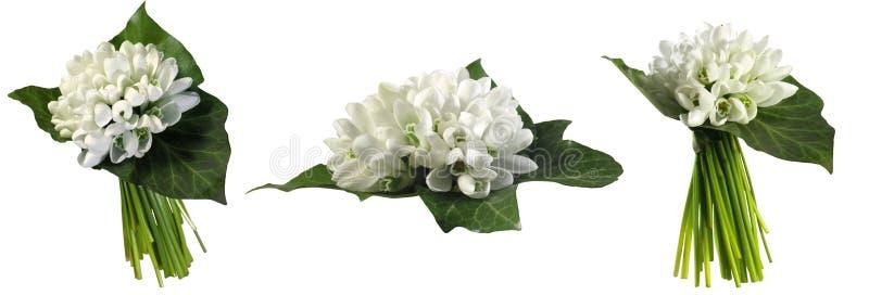 snowdrops 在白色背景隔绝的第一朵春天花 免版税库存图片
