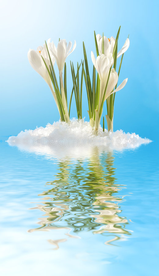 snowdrops λευκό στοκ φωτογραφίες με δικαίωμα ελεύθερης χρήσης