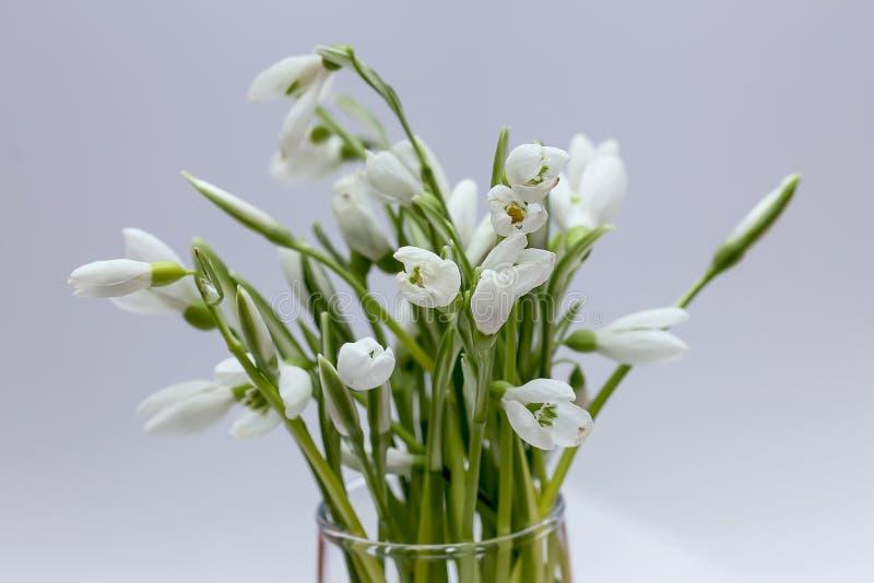 Download Snowdrops в стекле стоковое фото. изображение насчитывающей green - 40584326
