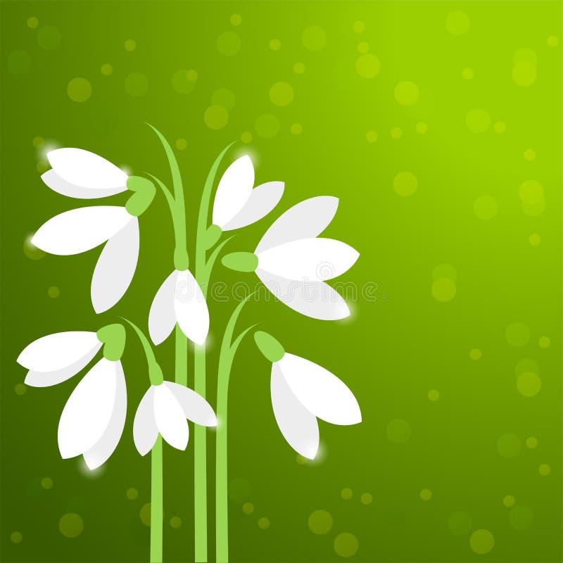 Snowdrops, первые цветки весны иллюстрация вектора