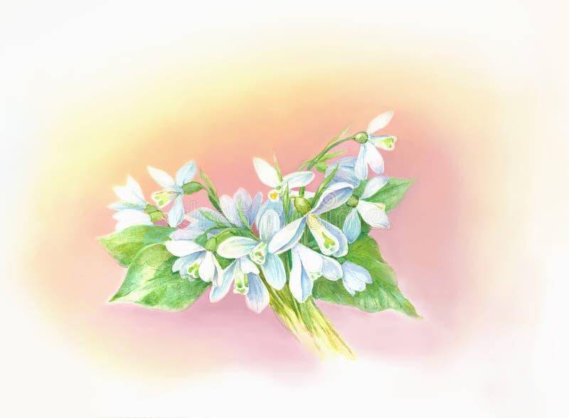 Snowdrops illustration stock