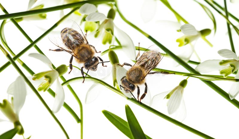 Spring flowers and bees royalty free stock images