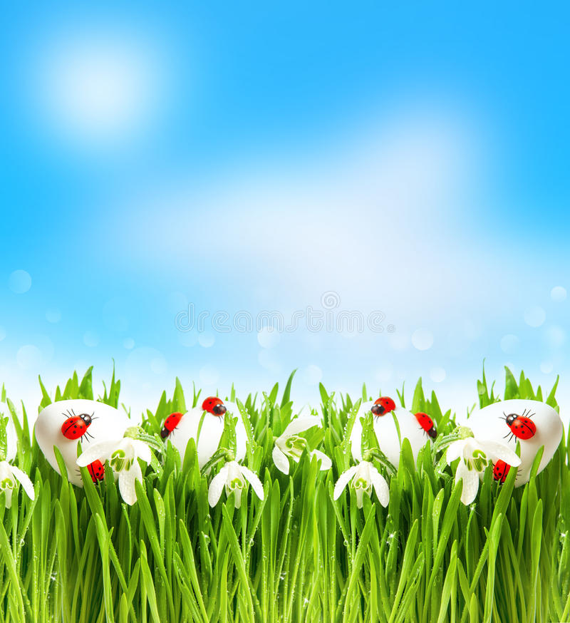 Snowdrops and easter eggs with blurred background royalty free stock image