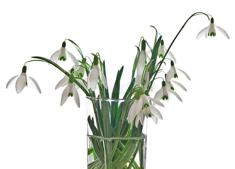 Snowdrops in einem Vase lizenzfreie stockfotos