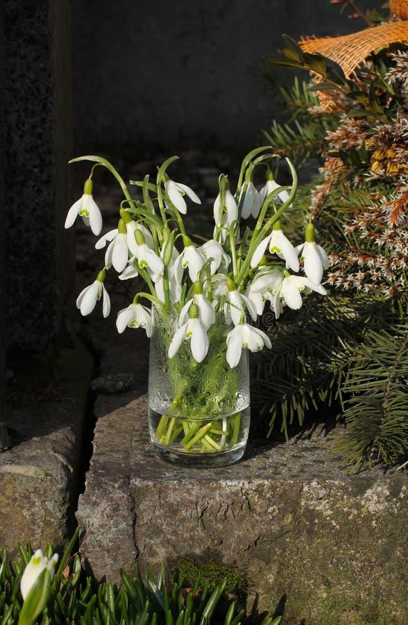 Snowdrops em um vaso foto de stock