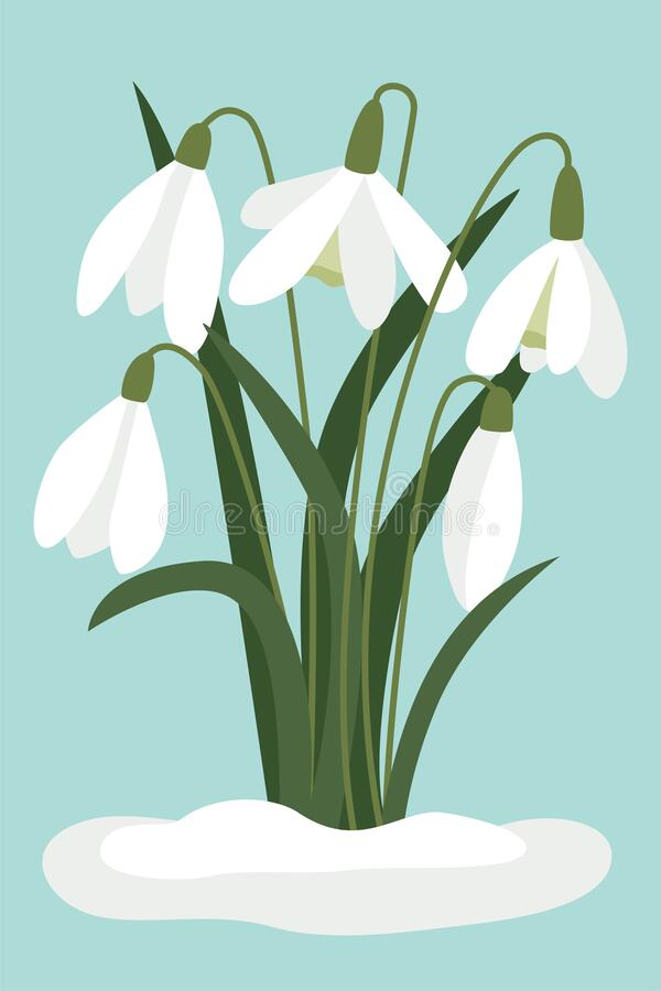 Free Snowdrops In The Snow. Vector, White Small Flowers. Symbol Of The Arrival Of Spring. The First Flowers, Delicate Light Forest Royalty Free Stock Images - 210300719