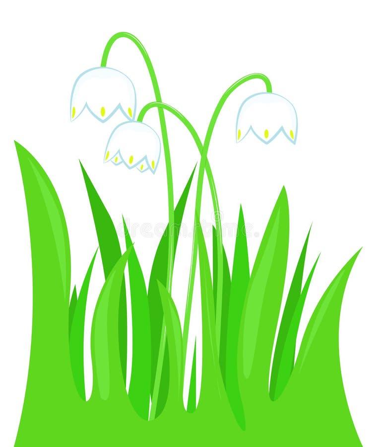 Snowdrops na grama ilustração do vetor