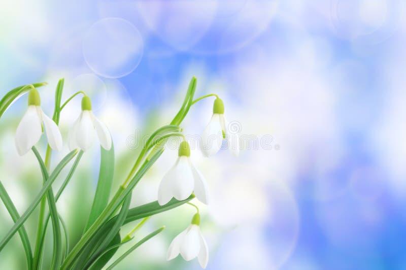 Snowdrops (nivalis di Galanthus) sulla priorità bassa del cielo immagine stock