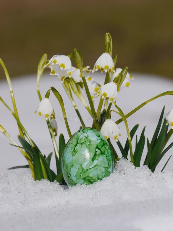 Snowdrops que cresce para fora a neve com ovos da páscoa fotografia de stock royalty free