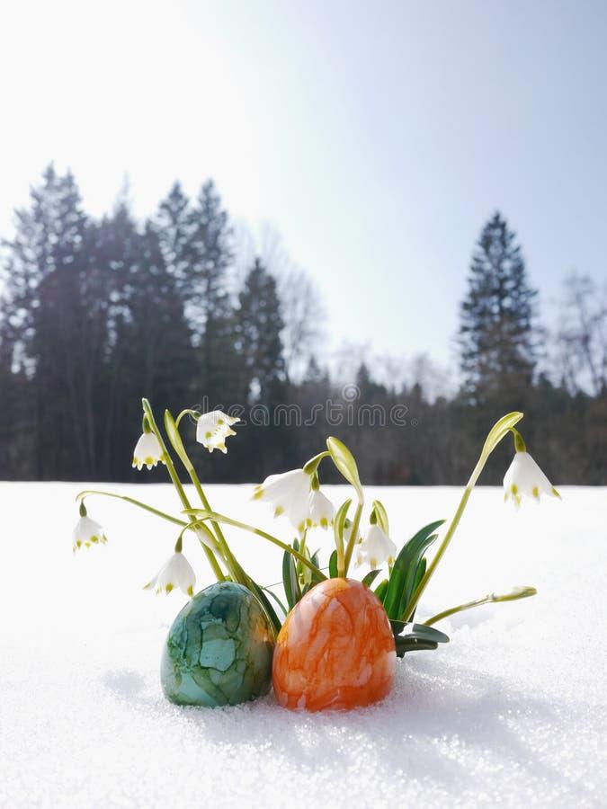 Snowdrops que cresce para fora a neve com ovos da páscoa imagem de stock royalty free