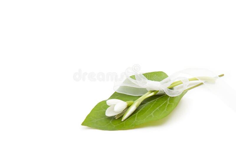 Snowdrops - spring flower stock photos
