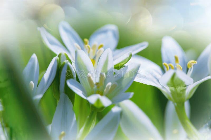 Snowdrops. In spring season stock image