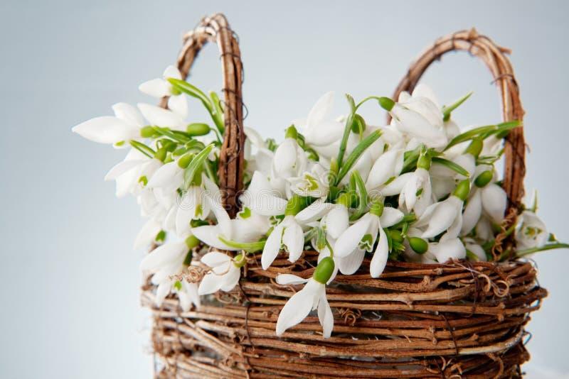 Snowdrops In Wicker Basket Stock Photo