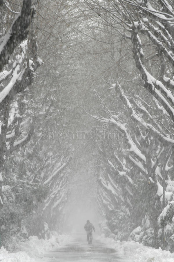 Snowed Alley Stock Images