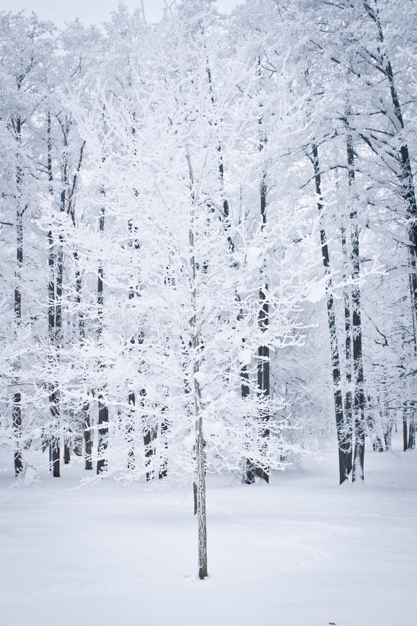 Download Snowed Tree stock image. Image of view, dark, frozen - 12539475