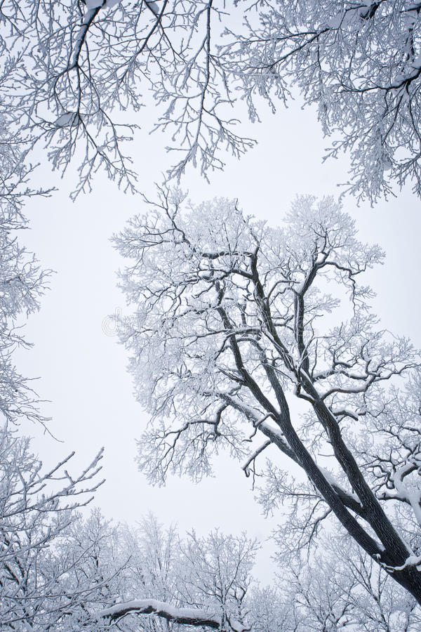 Download Snowed Tree stock photo. Image of frozen, branch, detail - 12539566