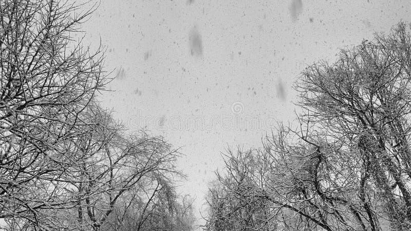 snowfall imagens de stock