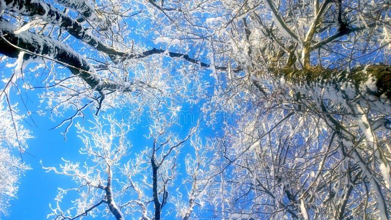 snowfall obraz stock