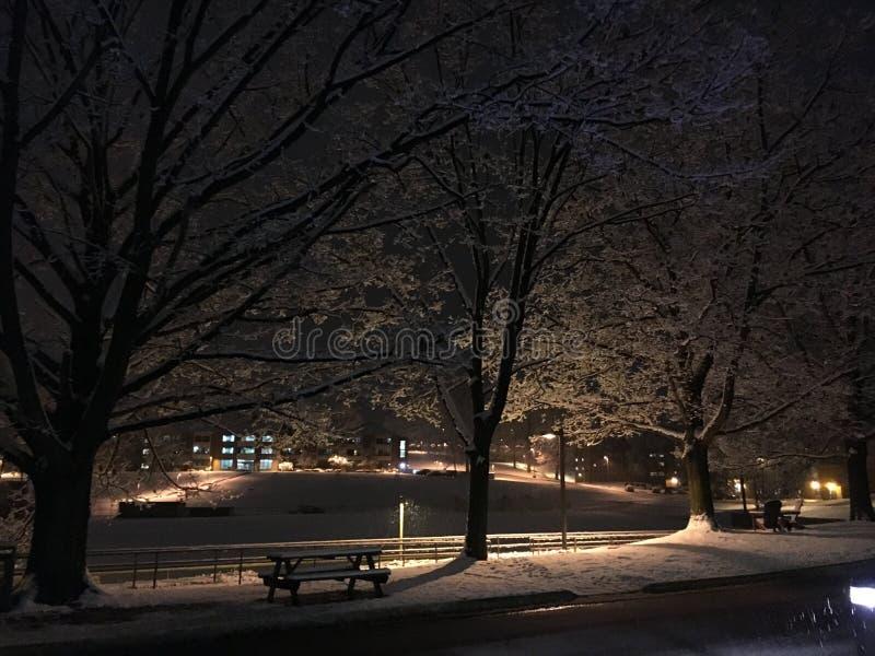 snowfall photos libres de droits