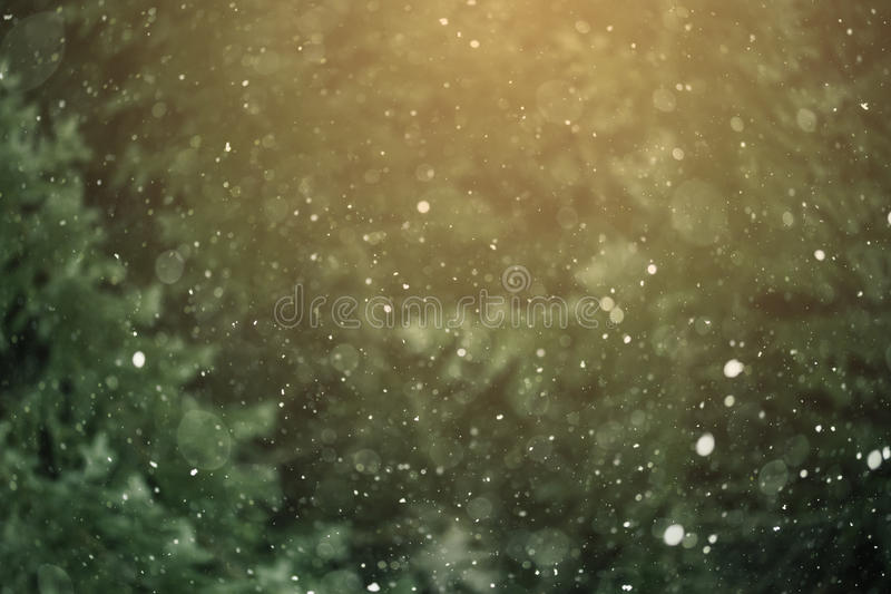 Snowfall Against the Background of the Forest royalty free stock photo